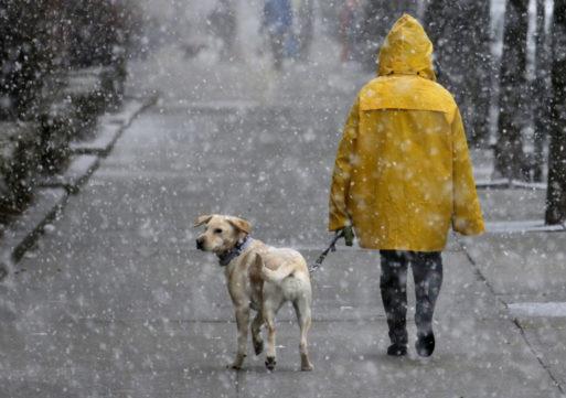 20-21 січня сильний мороз зміниться на сніг, – гідрометцентр