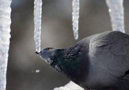 Готуймо гумові чоботи: з 29 січня очікується денна температура до +6º