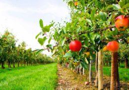 IV Міжнародна конференція для галузей садівництва і переробки відбудеться у Черкасах у березні