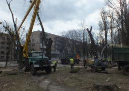 У Черкасах обрізають та омолоджують старі дерева