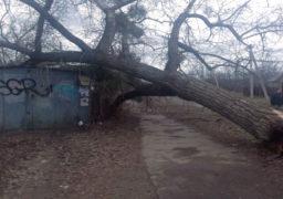 Доки у Смілі шукають гроші на видалення аварійних дерев, останні продовжують падати самовільно
