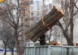 На Новопречистенській комунальники зрізали аварійне дерево