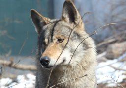 Прогулянка Черкаським зоопарком: Земля ведмедів і вовків