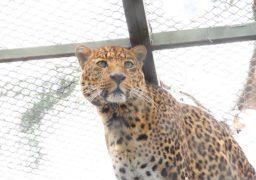 Прогулянка Черкаським зоопарком: котові
