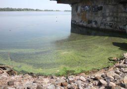Цвітіння води в Дніпрі ніяк не загрожує якості питної води
