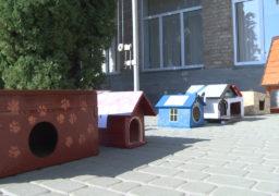 Учні Смілянської школи-колегіуму №3 створили будиночки для котів-безхатченків