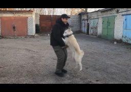 Хепі-енд: пес знайшов нового господаря, поки люди думали, що над собакою знущаються