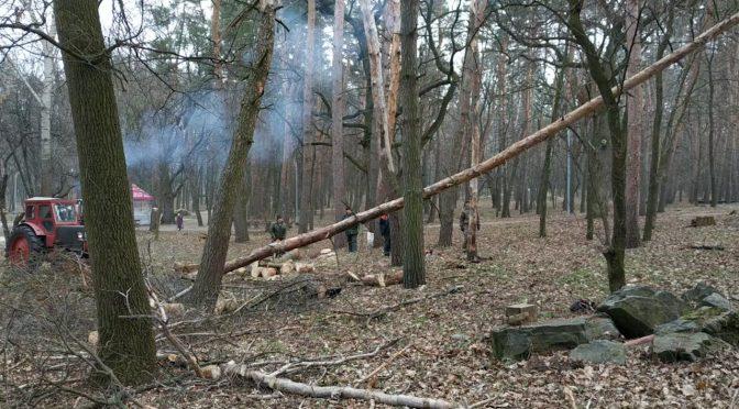 """У парку """"Сосновий бір"""" зрізають відбраковані дерева"""