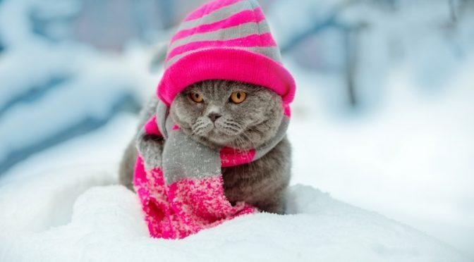 З 11 лютого очікується потепління, але поки що Черкащина перебуває у морозній смузі