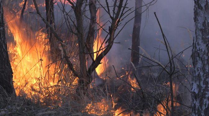Кабмін пропонує збільшити штрафи для громадян за випалювання рослинності: від 850 до 17000 гривень