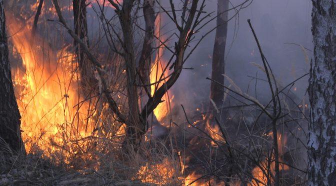 У Липівському орнітологічному заказнику – масштабна пожежа