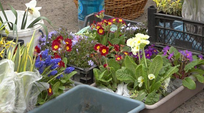 У Смілі організована торгівля насінням та садовими матеріалами