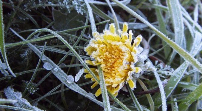 Синоптики прогнозують у найближчі два дні прохолодну погоду і нічні заморозки