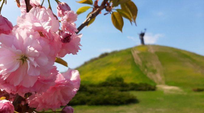 У Долині троянд у Черкасах зацвіли сакури