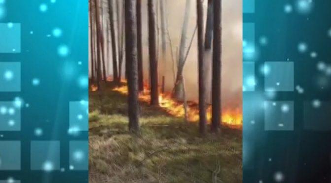 Смілянські рятувальники гасять пожежі в Чорнобилі