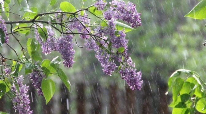 У вихідні можливий невеликий дощ, а денна температура триматиметься в межах 13-18º