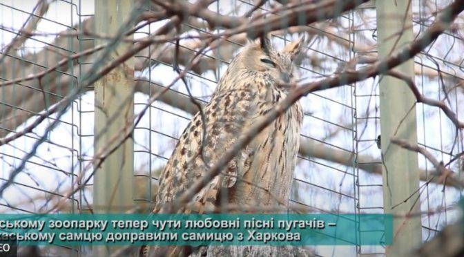 Поповнення в Черкаському зоопарку: у пари пугачів з'явилося пташеня