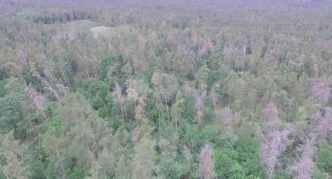 Поблизу Черкас всихає ліс