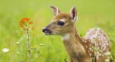 Зоологи просять не чіпати дитинчат диких тварин, яких зараз часто можна зустріти у лісах