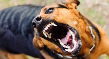 31 травня у Черкасах виявили випадок сказу безпритульного собаки