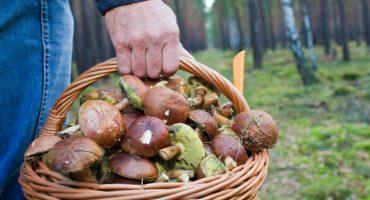 На Черкащині зареєстровано перший випадок отруєння дикорослими грибами