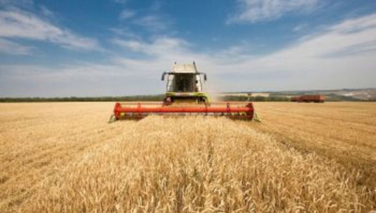 Площа з ґрунтовою засухою на Черкащині збільшилася і спостерігається під озимими зерновими на 25% території області у її східній частині. Спекотна червнева погода, після травневої прохолоди, сприяє прискореному розвитку сільгоспкультур та одночасному дозріванню ранніх хлібів, незалежно від строків сівби, що створить напруженість у проведення жнив.