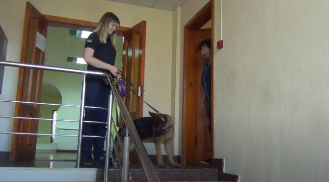 """Черкаські рятувальники долучилися до всеукраїнської акції """"Візьми собаку на роботу"""""""