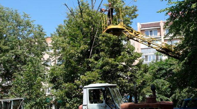 Вздовж бульвару у середмісті Черкас обрізають сухе гілля та аварійні дерева