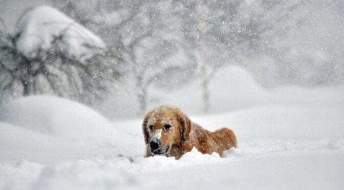 Україну засипле снігом: Укргідрометцентр дав прогноз на грудень