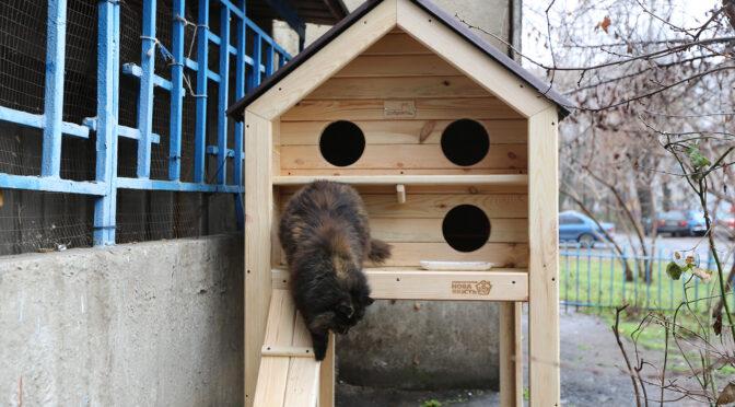 У  Черкасах встановлюють будиночки для безпритульних котів