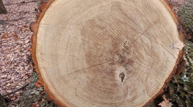 На Черкащині масово нищать ліси під виглядом санітарної рубки