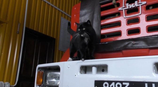 У Золотоноші з'явився незвичайний пожежник — кіт Василь
