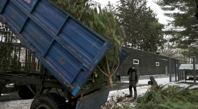 «Нова якість» збирає новорічні ялинки для Черкаського зоопарку