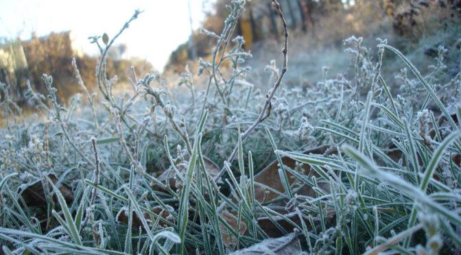 24-26 квітня очікуються заморозки у повітрі 0 –3°С (помаранчевий рівень небезпеки) — синоптики