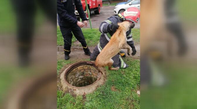 У відкритий колодязь у Смілі втрапили два безпритульних собаки. Визволяли їх за допомогою  рятувальників