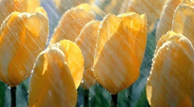 1 травня — тепло, 2 травня — очікуються грози і град, а 4-5 знову похолодає