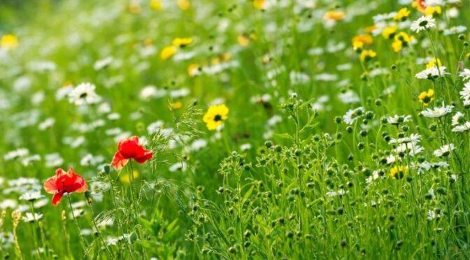 Синоптики: дощі та грози до 17 червня, а з 19-20 нарешті почнеться літо