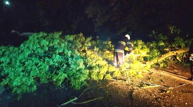 За минулу добу рятувальники двічі виїздили на виклики, пов'язані з поваленими деревами