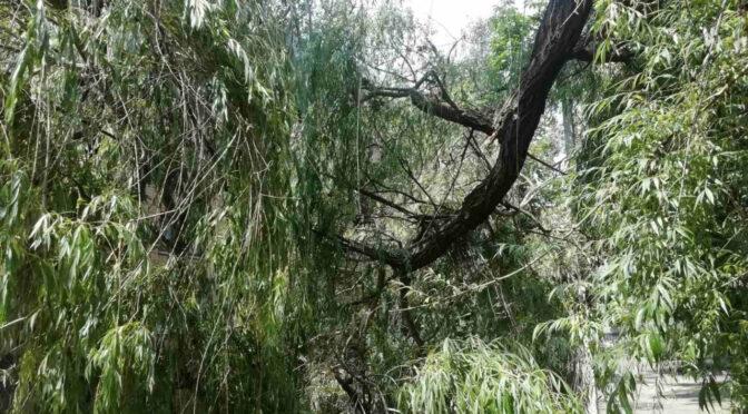 Через сильні пориви вітру у Черкасах велика гілка повисла на електродротах