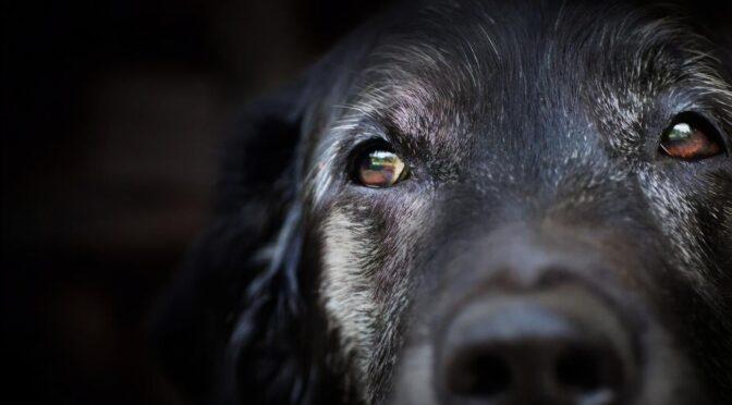 Завершилося слідство щодо чоловіка, який побив і викинув з вікна свого собаку. Правоохоронці клопочуть про застосування щодо обвинуваченого примусових заходів медичного характеру