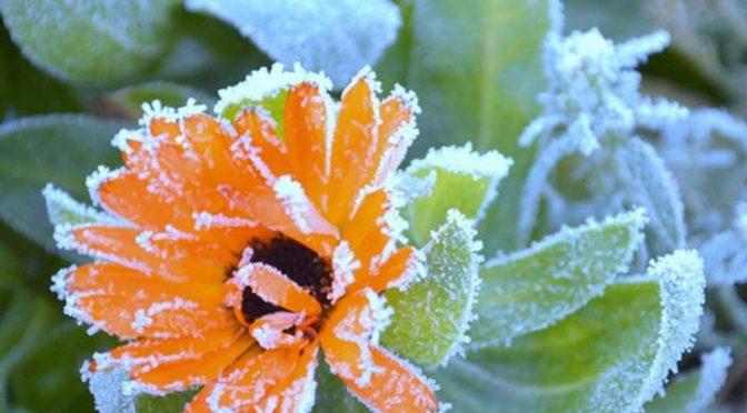 6-7 вересня на Черкащині очікуються перші заморозки — синоптики
