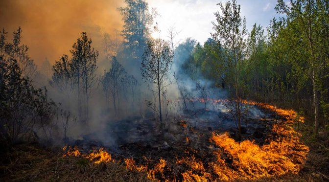 17-19 вересня на Черкащині встановлено найвищий рівень пожежної небезпеки