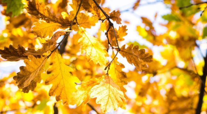 Із 20 вересня в Україну заходить перший справжній холод — вдень лише +7+13°С. Потепліє ближче до вихідних